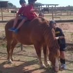Girona coaching horses