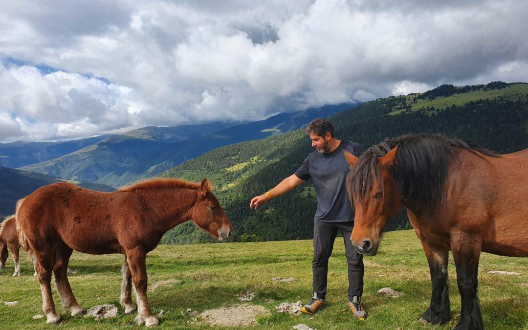Sessions d'introducció al món del cavall