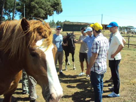 Coaching avec des chevaux à Girona.