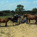 chevaux de coaching