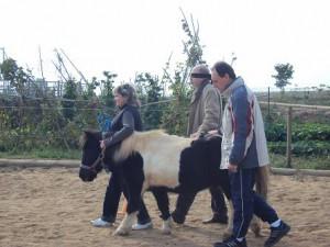caballo guia