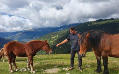 Sessions d'initiation au monde du cheval