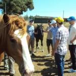 chevaux entraîneur Girona
